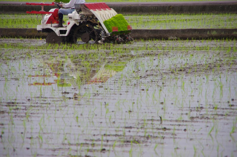 Download Rice Planting By Machine Royalty Free Stock Photos - Image: 25474108