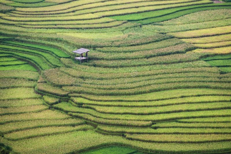 Rice pola bruzda tarasował z budą w Tule obraz stock