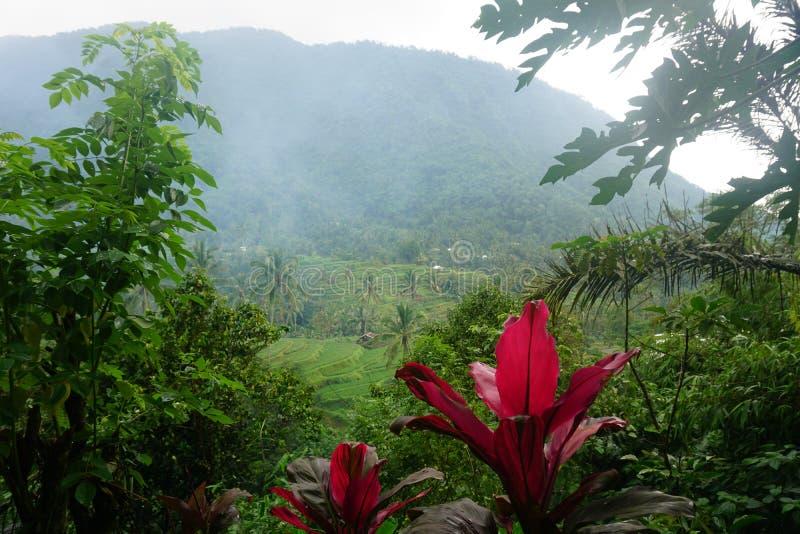 Rice pole Bali z chmurami i drzewkami palmowymi obraz royalty free
