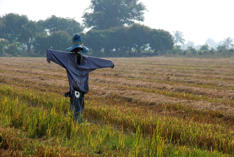 Rice pole (strach na wróble) fotografia royalty free