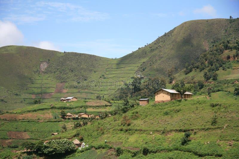 Rice sätter in i Uganda, Afrika royaltyfria bilder