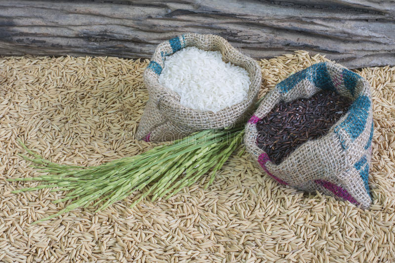 Rice seed stock photography