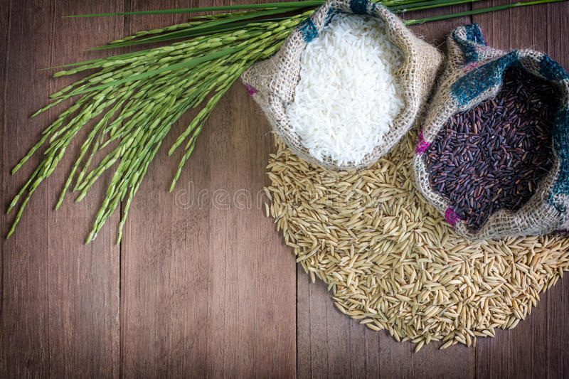 Rice seed royalty free stock image