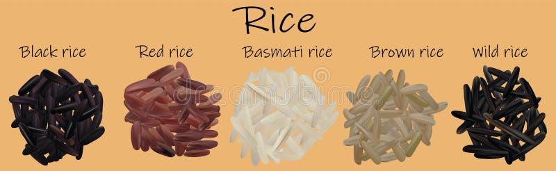 Rice set Czerń, czerwień, basmati, brąz, dziki Vectric 3d ilustracja, ryż w górę royalty ilustracja