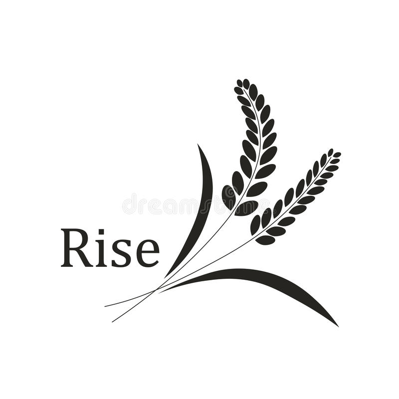 Rice spike wheat royalty free stock image