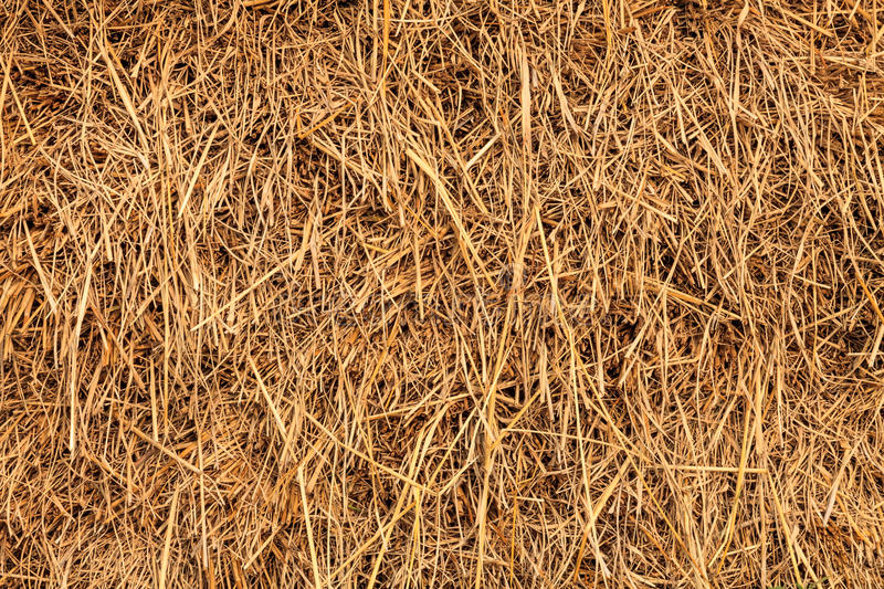 Download Rice Straw Background, Thailand Stock Image - Image: 37365127