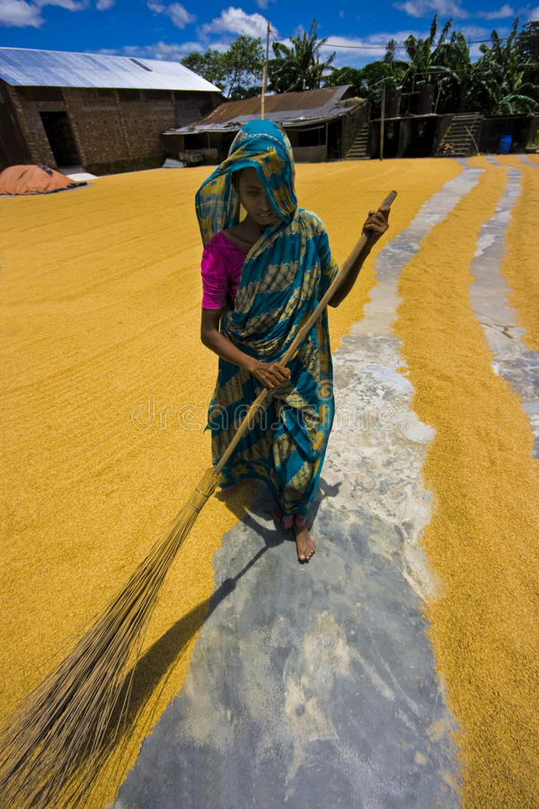 Rice sweeper royalty free stock photos