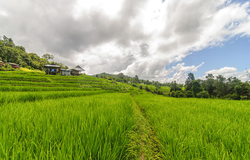 Rice taras przy zakazem PaPongPieng zdjęcia stock