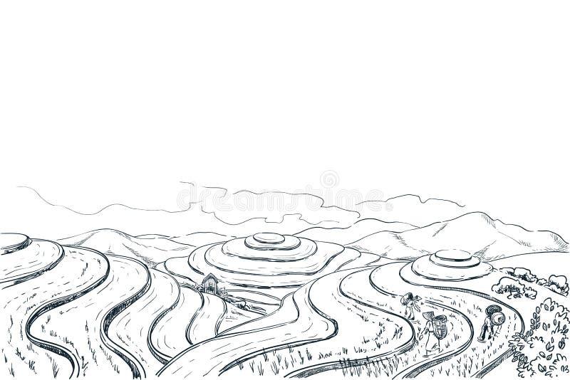 Rice tarasu pola, wektorowa nakreślenie krajobrazu ilustracja Azjatycki zbiera rolnictwa tło Porcelanowa wiejska natura ilustracja wektor