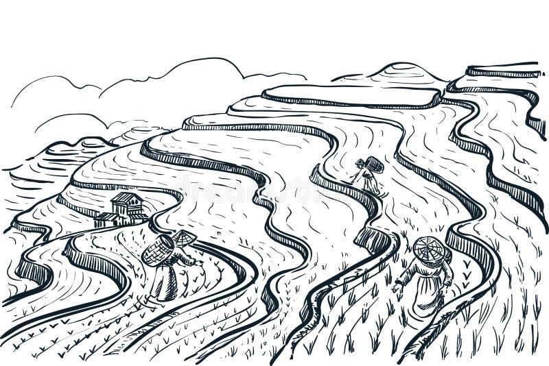 Rice tarasu poly krajobraz, wektorowa nakreślenie ilustracja Azjatycki rolnictwo i zbierać Porcelanowy wiejski natura widok royalty ilustracja
