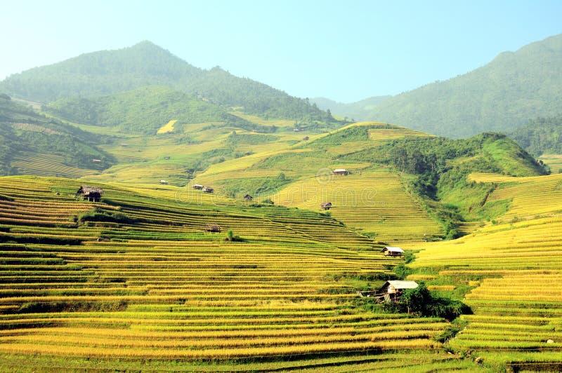Rice tarasuje MuCangChai - uprawa fotografia stock