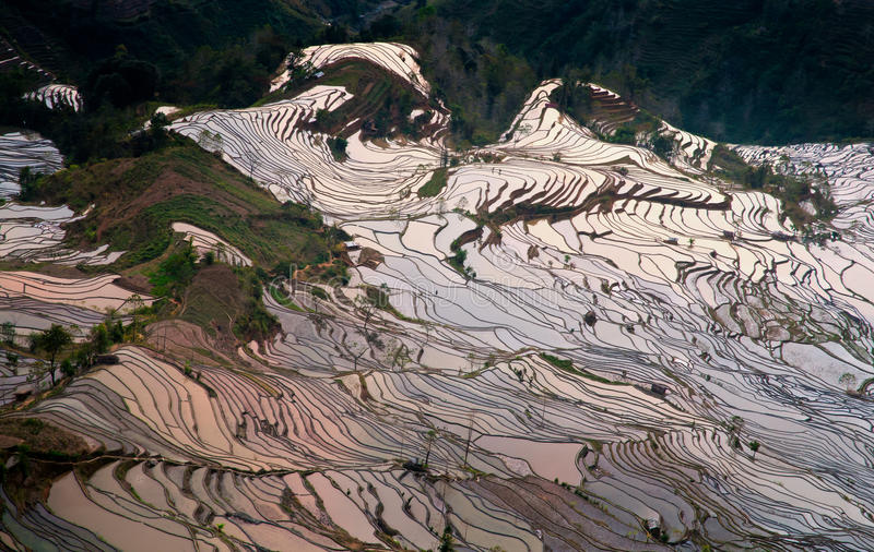 Download Rice terrace stock image. Image of field, landscape, cultivation - 24860547