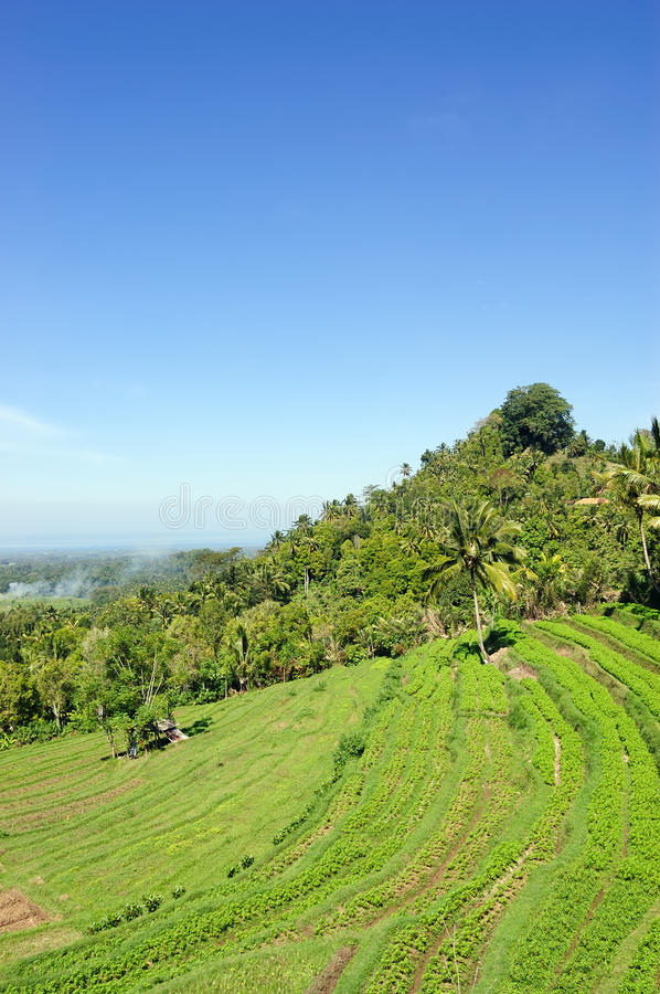 Download Rice terrace on Bali stock photo. Image of formation - 12433462