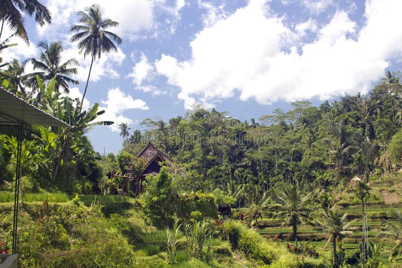 Download Rice terrace in Bali stock image. Image of landscape - 118139963
