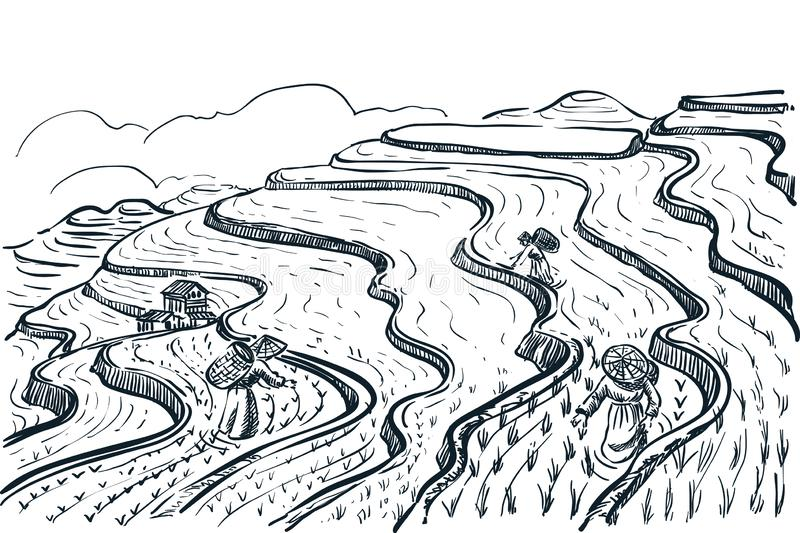 Rice terrace fields landscape, vector sketch illustration. Asian agriculture and harvesting. China rural nature view. Rice terrace fields landscape, vector royalty free illustration