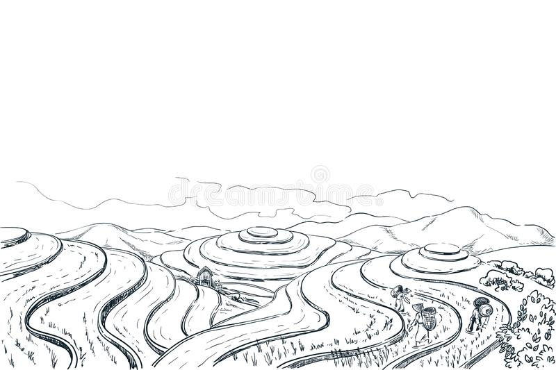 Rice terrace fields, vector sketch landscape illustration. Asian harvesting agriculture background. China rural nature. Rice terrace fields, vector sketch vector illustration