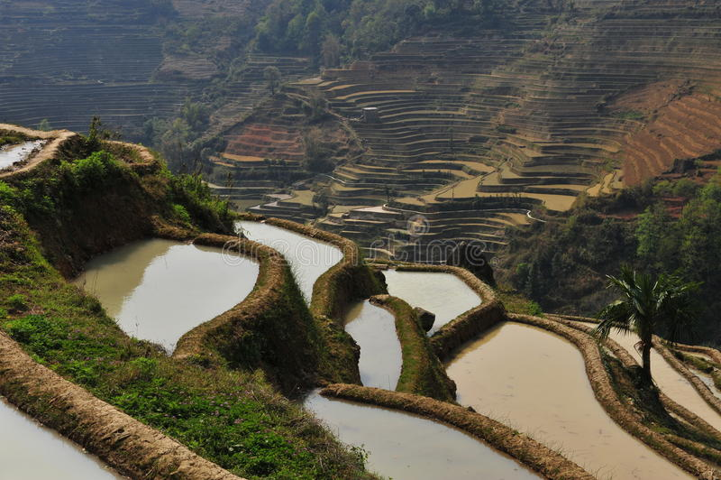 Rice terrace full of water royalty free stock images