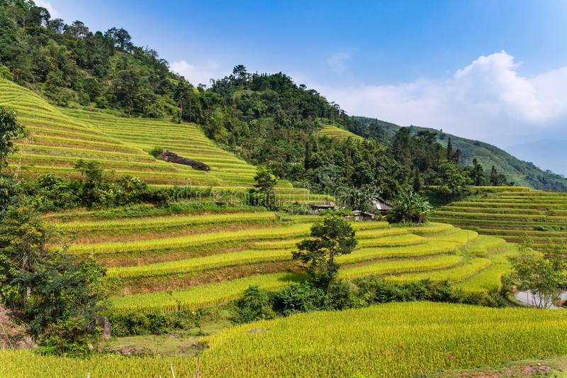 Rice terrace in Ha Giang Province, Northern Vietnam royalty free stock photography