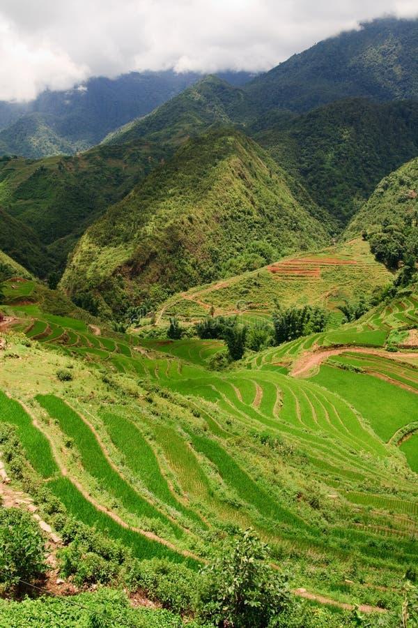 Free Rice Terrace Landscape Royalty Free Stock Photos - 17252438