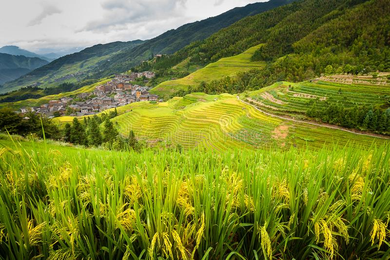 Rice Terrace in Longshen Guilin China stock image