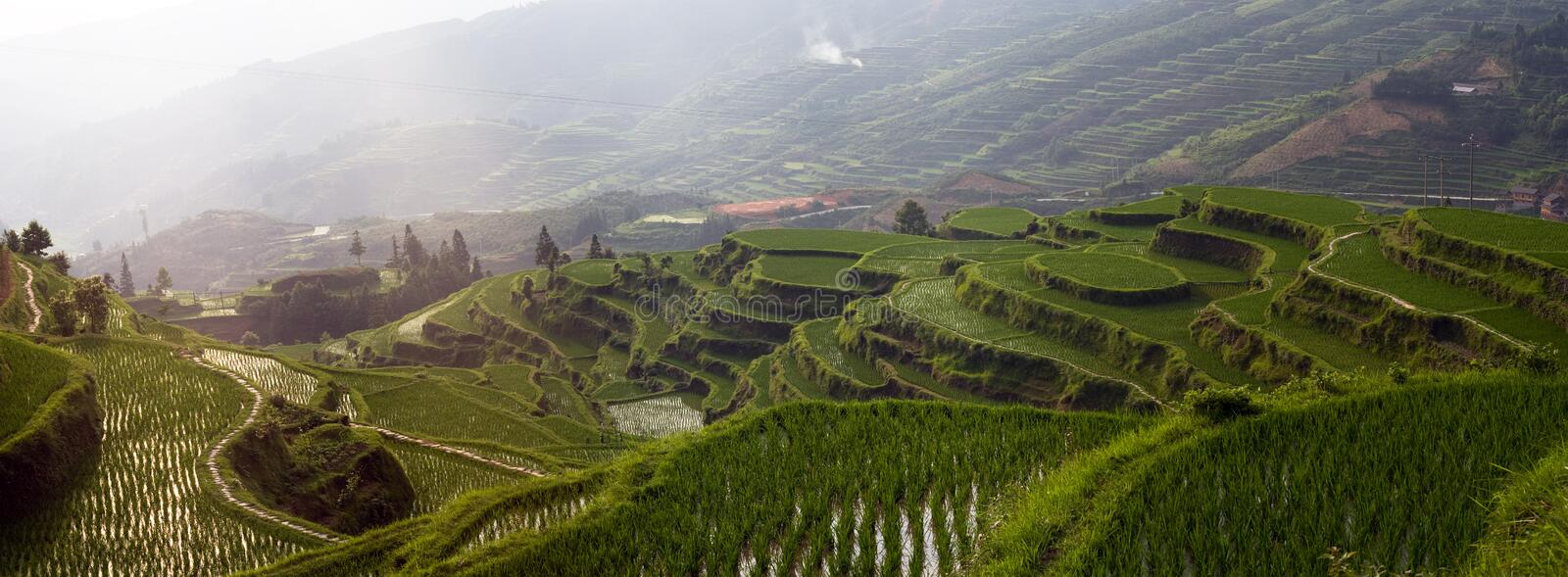 Rice terrace on the mountain stock images
