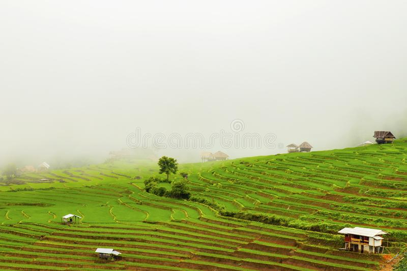 Rice terrace at Pa-pong-peang , Mae Chaem, Chaing Mai ,North Thailand royalty free stock image
