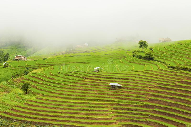 Rice terrace at Pa-pong-peang , Mae Chaem, Chaing Mai ,North Thailand royalty free stock photos