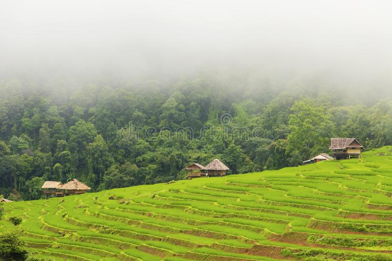 Rice terrace at Pa-pong-peang , Mae Chaem, Chaing Mai ,North Thailand royalty free stock images