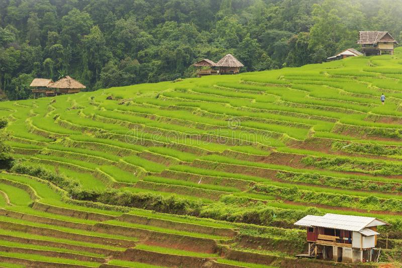 Rice terrace at Pa-pong-peang , Mae Chaem, Chaing Mai ,North Thailand stock photos