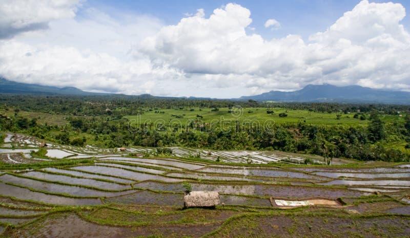 Rice Terrace Panorama Stock Image
