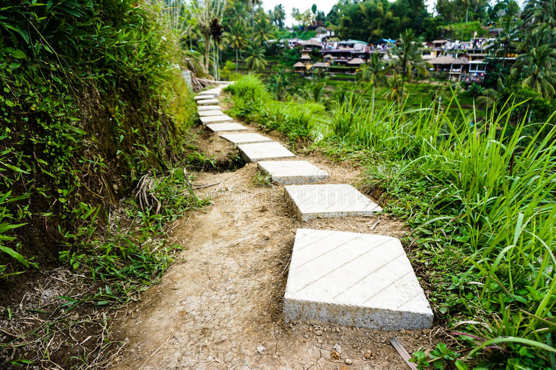 Rice Terrace Path Forward. A path leads onward through the rice terraces in Bali stock photography