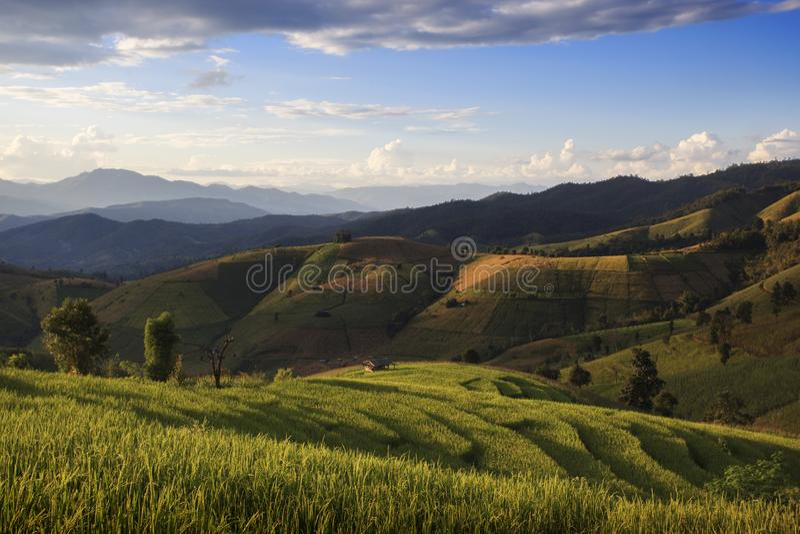Rice Terrace at Ban Pa Pong Piang, Chiang Mai, Thailand royalty free stock photos