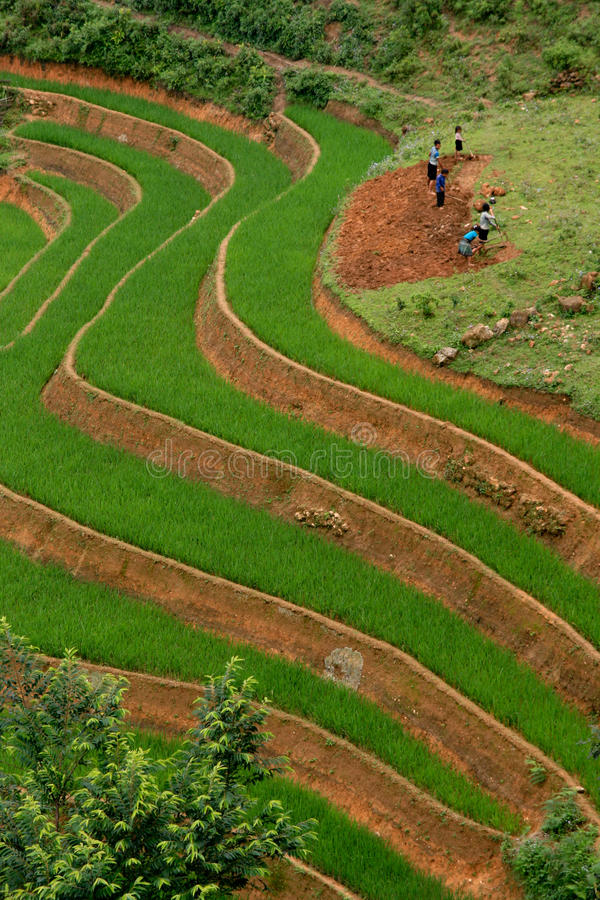 Rice Terrace Workers royalty free stock images