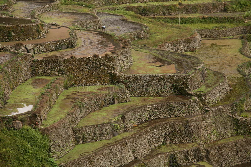 Download Rice terraces stock photo. Image of traveling, asia, worker - 12981832