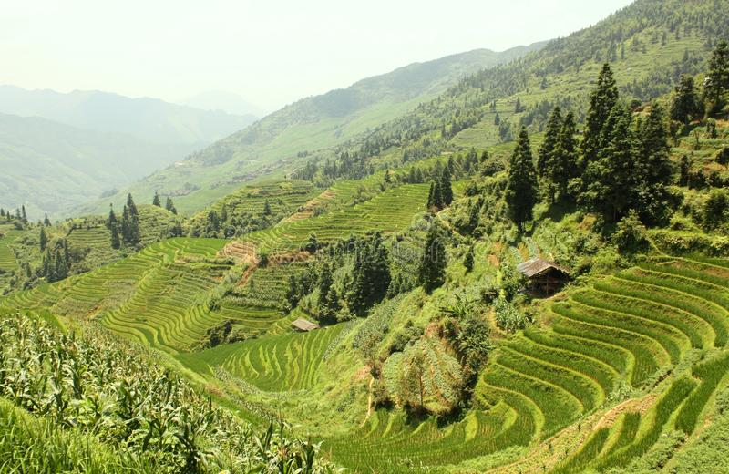 Download Rice Terraces stock image. Image of ecologic, field, growth - 18143711