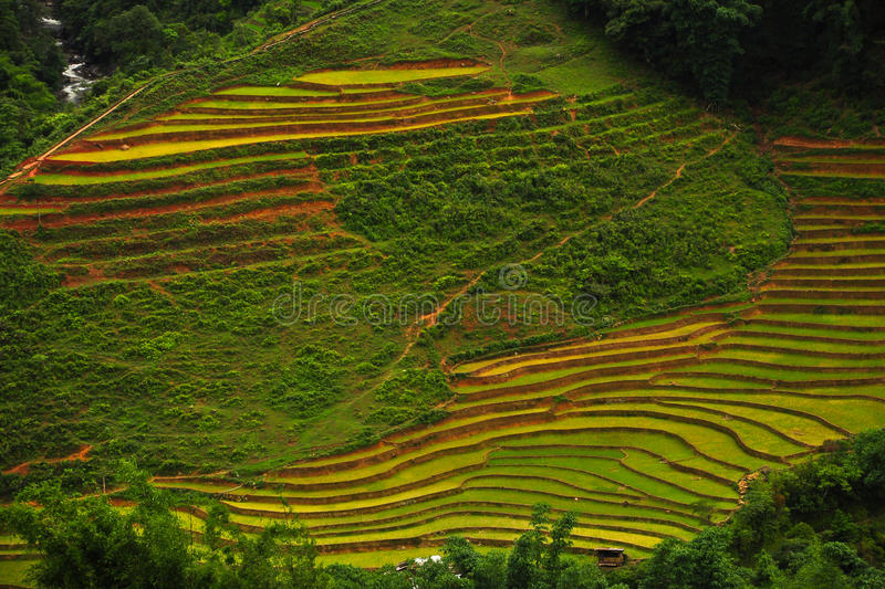Download Rice Terraces Royalty Free Stock Photography - Image: 22375187