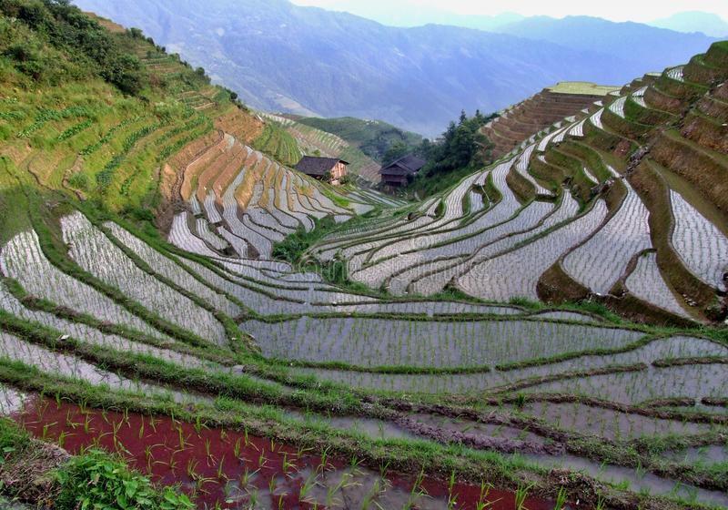 Rice terraces. In Pingan village in China stock images