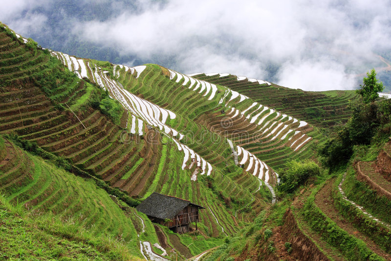 Rice terraces. This Zhuang ethnic minority village is located high in the Longji mountains. These rice terraces were constructed by the Zhuang minority people to royalty free stock photo