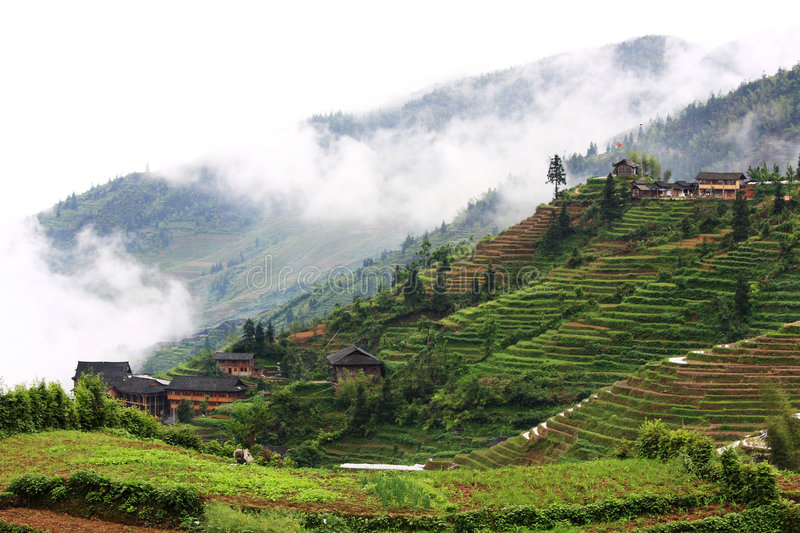 Rice terraces. This Zhuang ethnic minority village is located high in the Longji mountains. These rice terraces were constructed by the Zhuang minority people to stock photo
