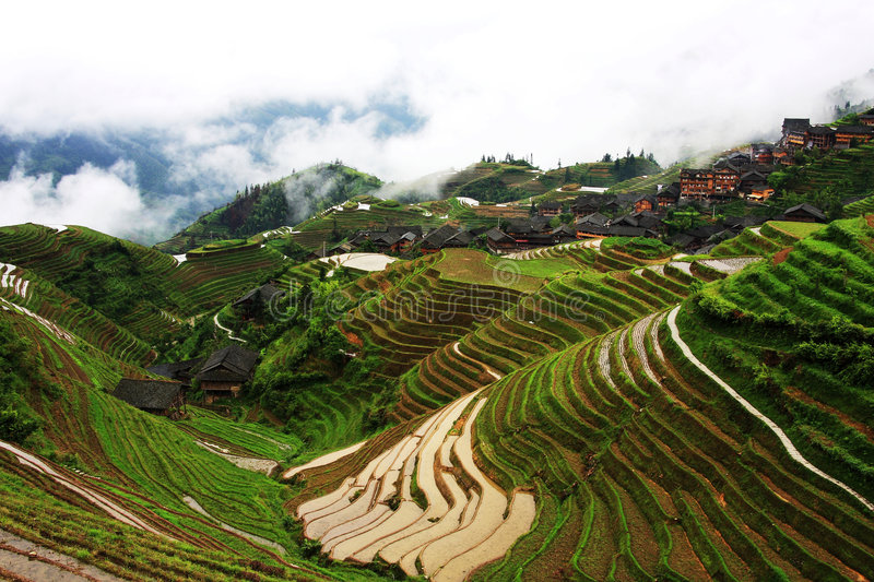 Rice terraces. This Zhuang ethnic minority village is located high in the Longji mountains. These rice terraces were constructed by the Zhuang minority people to stock image