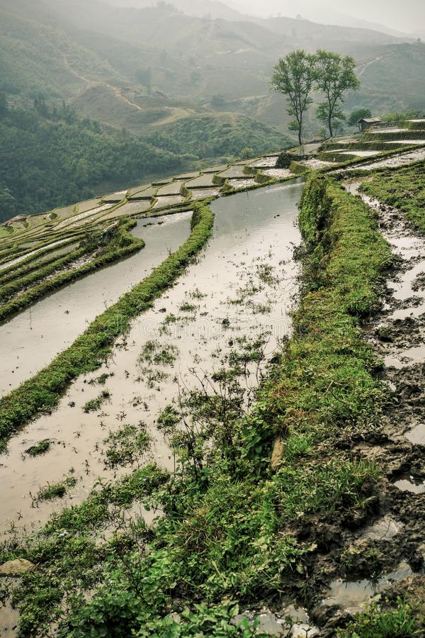 Rice Terraces Free Public Domain Cc0 Image