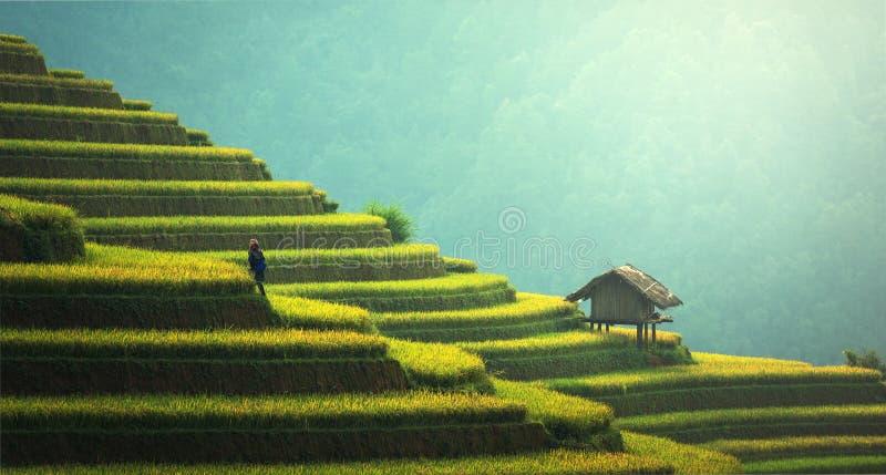 Rice terraces, China royalty free stock photos