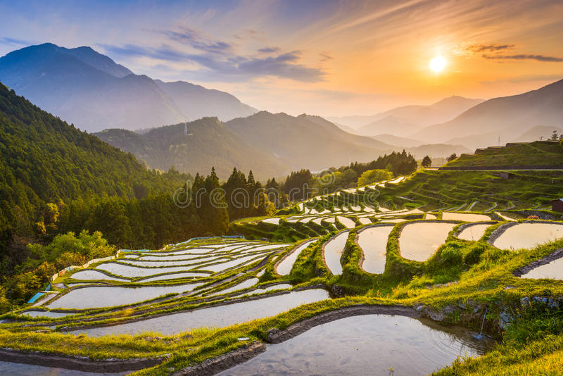 Rice Terraces in Japan royalty free stock images