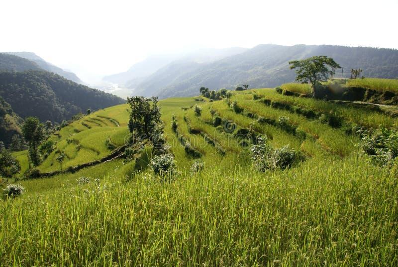 Rice terraces landscape royalty free stock photos