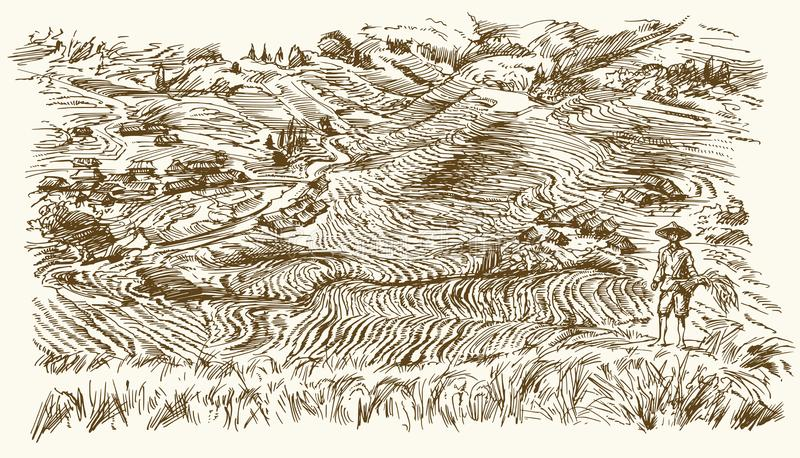 Rice terraces of Longsheng. stock illustration
