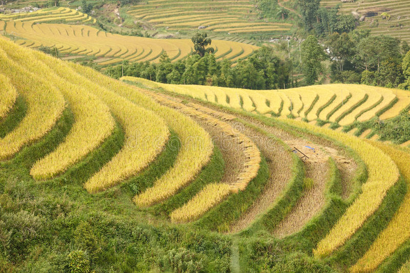 Rice terraces in the mountains