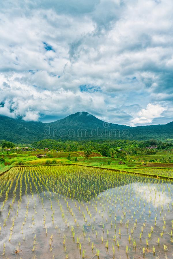 Rice terraces in mountains at cloudy sky, Bali Indonesia. Vertical orientation royalty free stock photography