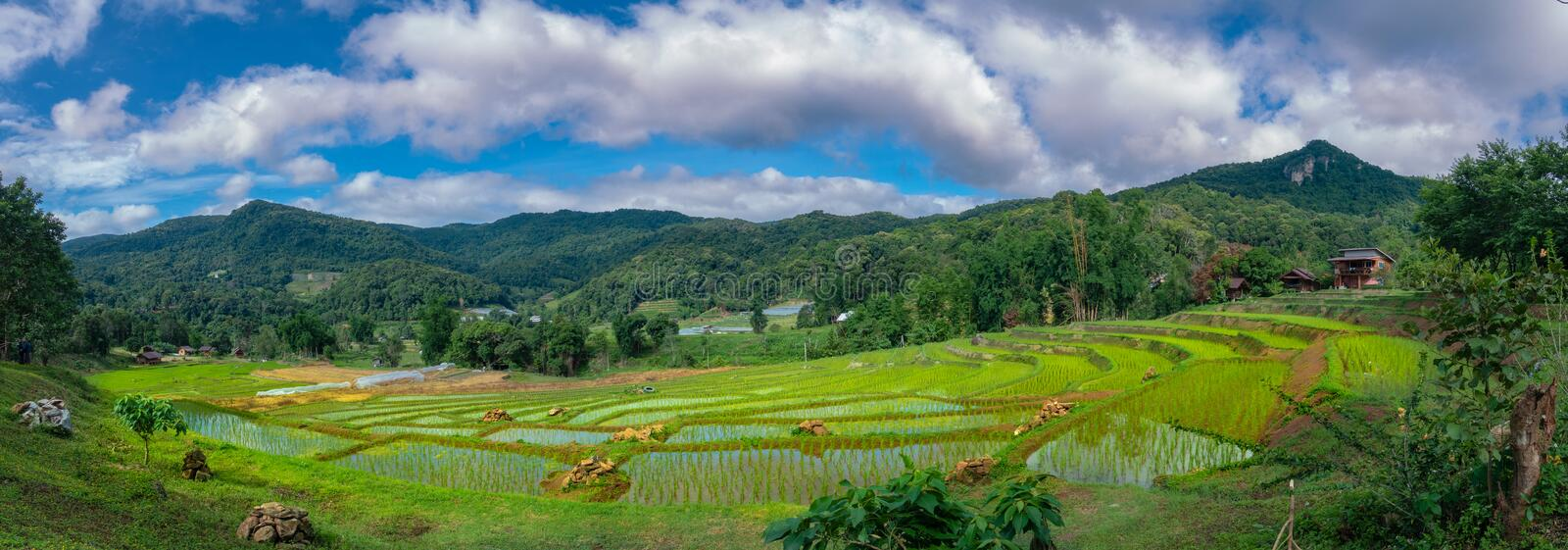 Panoramic view of rice terraces at Doi Inthanon national park, Chiang Mai, Thailand. stock image