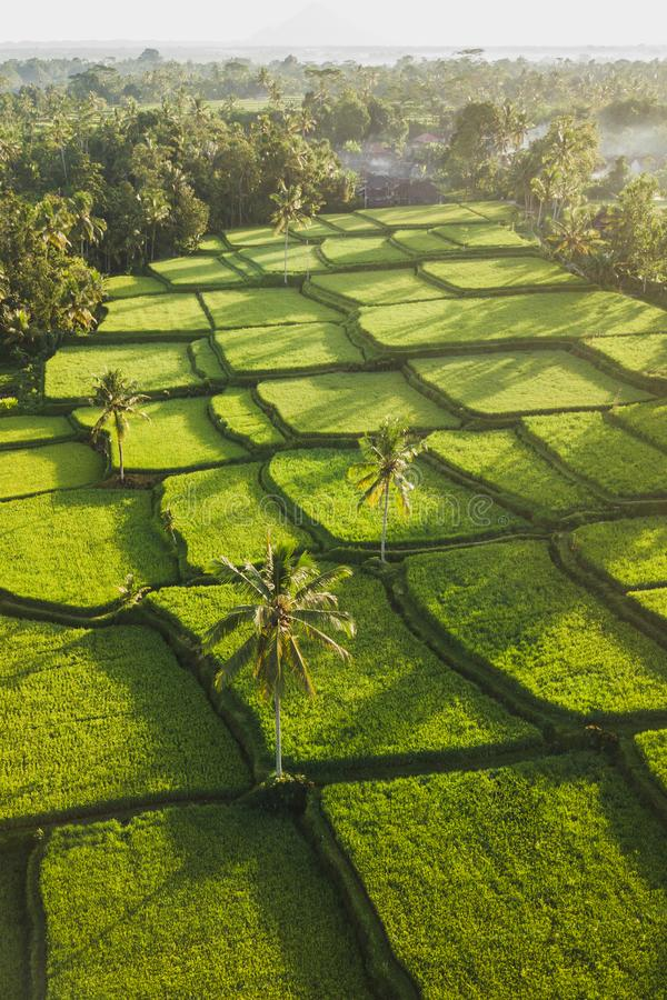 Rice terraces Tegallalang in Ubud at sunrise. Rice terraces hill in Ubud at sunrise, Bali Indonesia. Beautiful sun light and rays on field stock image