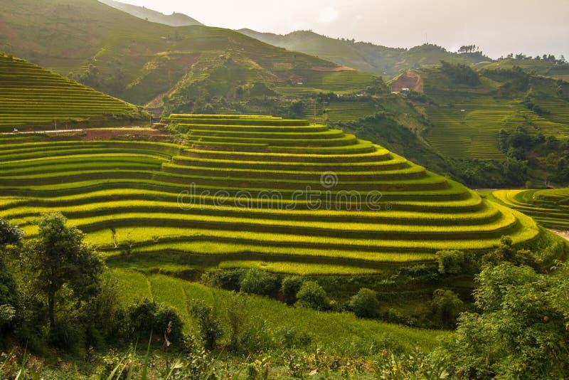 Rice terraces in Vietnam stock photography